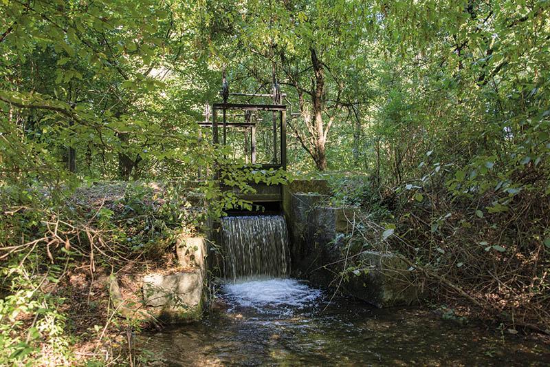 Vorgereinigtes Rheinwasser wird in der Langen Erlen versickert, um das Grundwasser anzureichern, aus dem heute das Basler Trinkwasser mehrheitlich gewonnen wird.